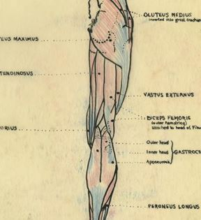 Vintage Anatomy Illustration