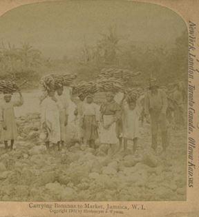 Banana Plantation Workers, Jamaica